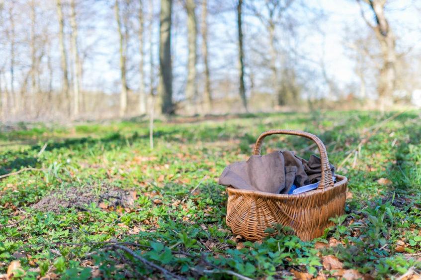 Strandens og skovens urter. find, bestem, anvend – kom godt i gang! #2 3/6-2018