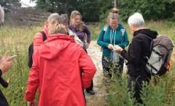 Smag på nordiske urter 3, 16/6 2019 – kursus i FOF Køge-regi