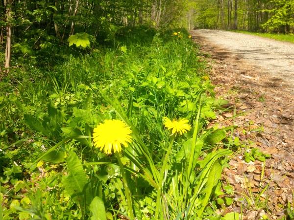 Skovens urter. Find, bestem, anvend – kom godt i gang! #1, 28/4-2019