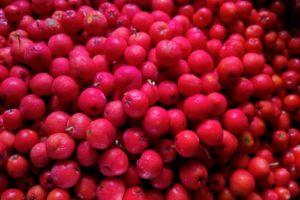 Rønnebærsnaps, Menageriet nr. 1