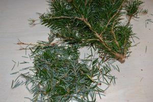 Smag på juletræet