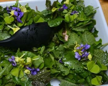 Plænesalat/salat med vilde urter og varmt røget laks